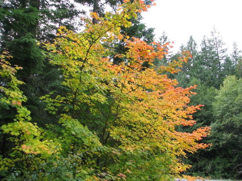 Fall pics ollalie road