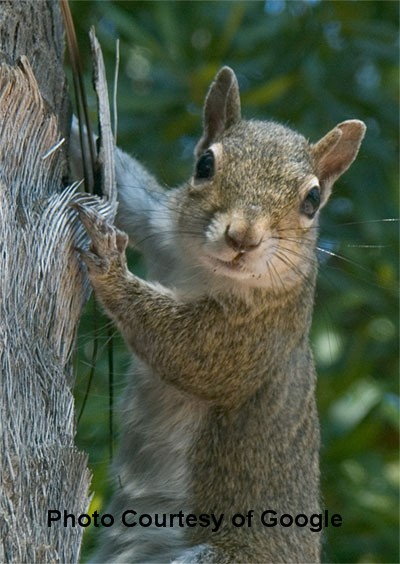 Squirrelsintree